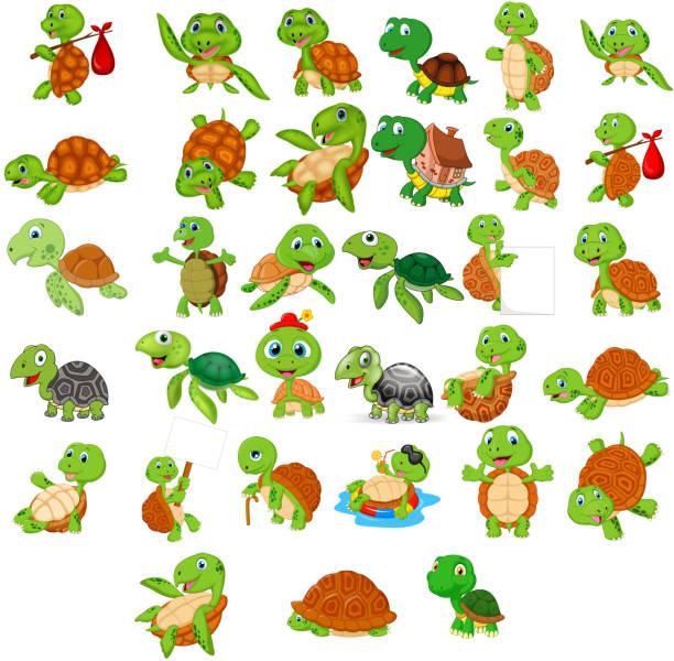 Cartoon turtle collection set Vector illustration of Cartoon turtle collection set turtle stock illustrations
