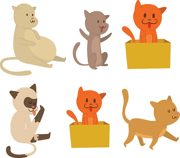royalty free cat box clip art vector images illustrations istock