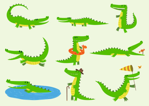 Cartoon vector crocodiles characters different green zoo animals. Cute crocodile funny animal with bath toy and big teeth. Happy predator reptyle character mascot comic color illustration Cartoon vector crocodiles characters different green zoo animals. Cute crocodile funny animal with bath toy and big teeth. Happy predator reptyle character mascot comic color illustration. crocodile stock illustrations