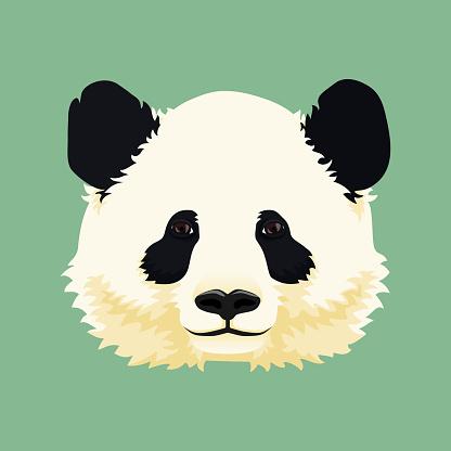 Cartoon vector illustration. Cute giant panda face. Black and white asian bear. Print, mask, poster design.
