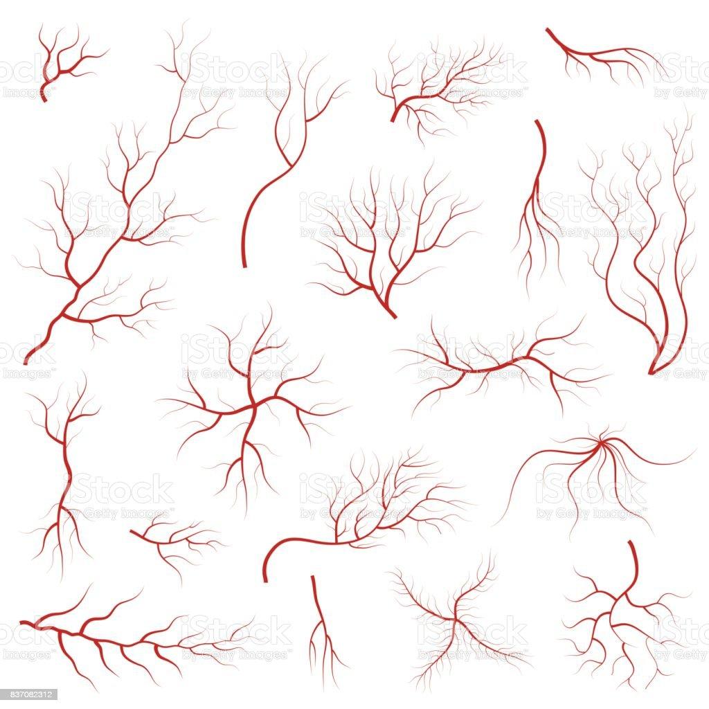 Cartoon Vein Blood Set. Vector vector art illustration