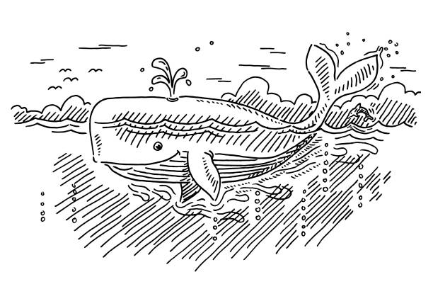 Cartoon Whale In The Ocean Drawing Hand-drawn vector drawing of a Cartoon Whale In The Ocean. Black-and-White sketch on a transparent background (.eps-file). Included files are EPS (v10) and Hi-Res JPG. environment stock illustrations