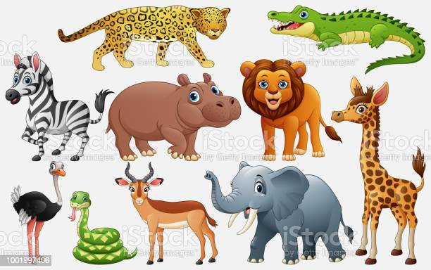 Cartoon wild animals on white background vector id1001997406?b=1&k=6&m=1001997406&s=612x612&h=a1tvlsmvhsqqhkcv9t yklersrui5p3ssuy8xdmnic4=