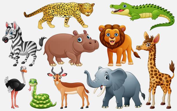 cartoon wildtiere auf weißem hintergrund - giraffenhumor stock-grafiken, -clipart, -cartoons und -symbole