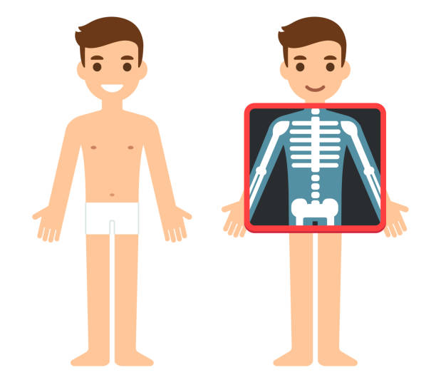Cartoon Xray character Cartoon male character getting x-ray checkup. Transparent screen showing chest bones. Radiography exam illustration, health and science vector clip art. x ray image stock illustrations
