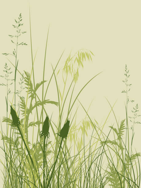 stockillustraties, clipart, cartoons en iconen met cartoonish overgrown grass and wild plants in varying greens - grasspriet