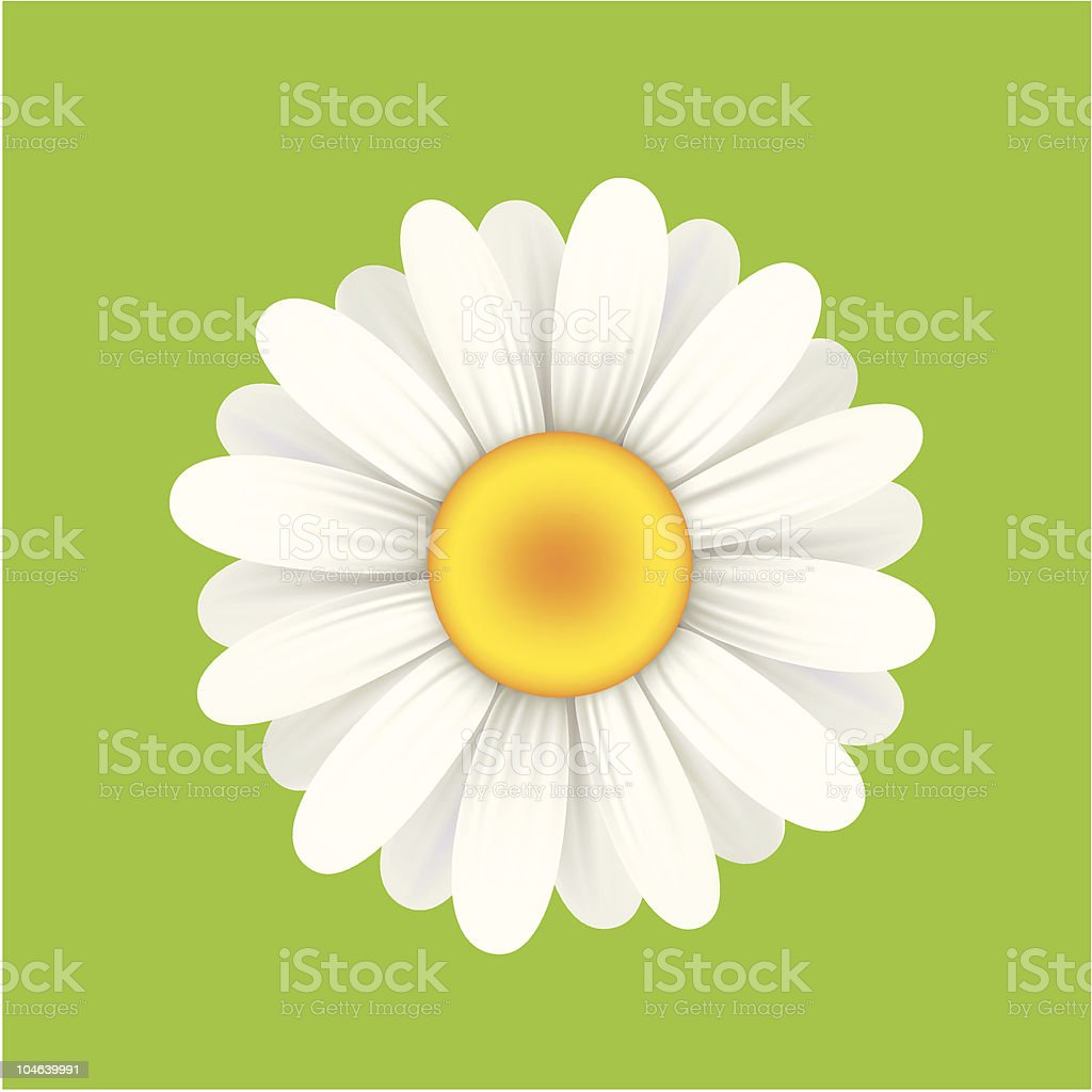 Cartoonish yellow and white daisy with green background vector art illustration