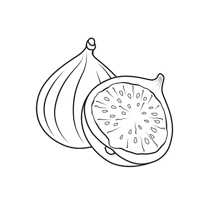 Cartoons fruit fig for kids This is a vector illustration for preschool and home training for parents and teachers.