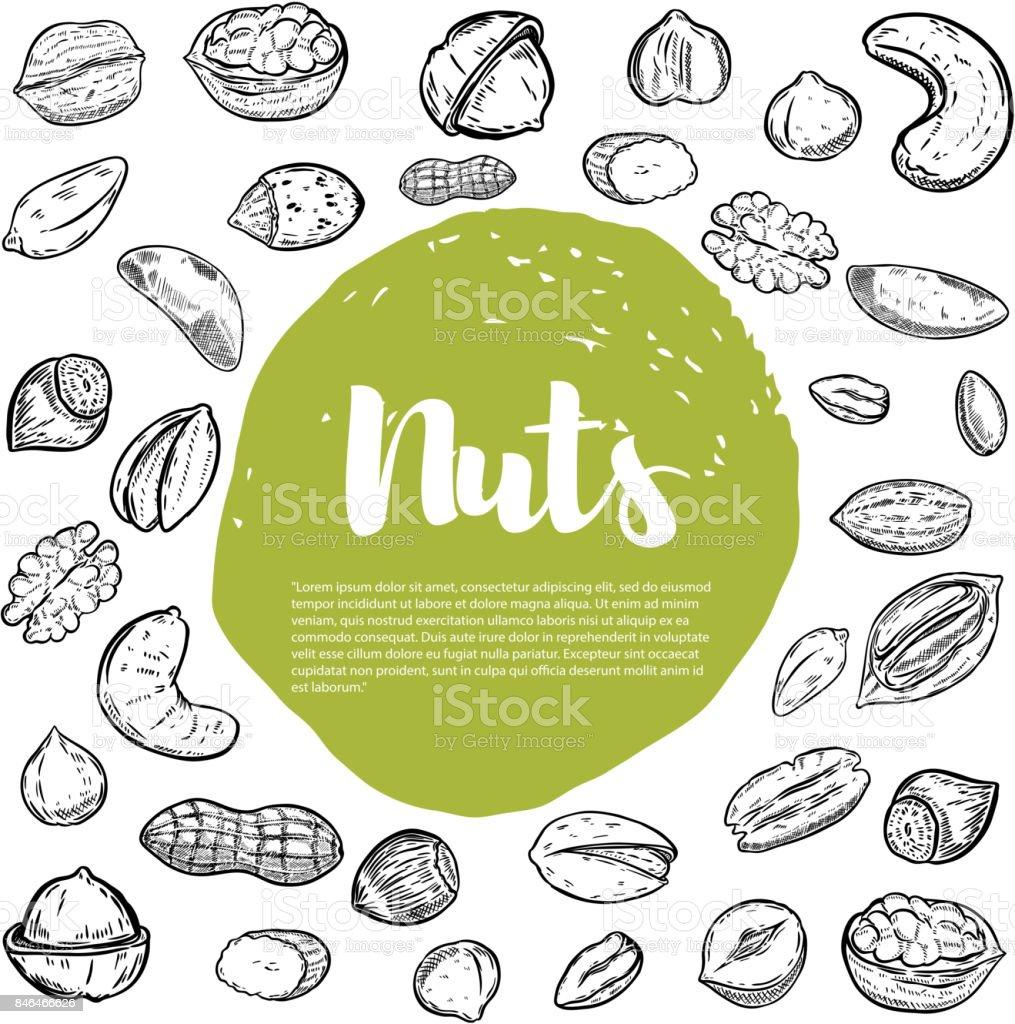 Cashew, hazelnut, walnut, pistachio, pecan nuts. Nuts sketches . royalty-free cashew hazelnut walnut pistachio pecan nuts nuts sketches stock illustration - download image now