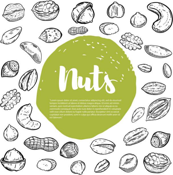 캐슈, 헤이즐넛, 호두, 피스타치오, 피칸 너트. 너트의 스케치 - nuts stock illustrations