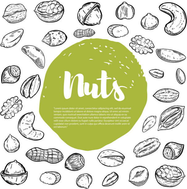 cashew, hazelnut, walnut, pistachio, pecan nuts. nuts sketches . - nuts stock illustrations