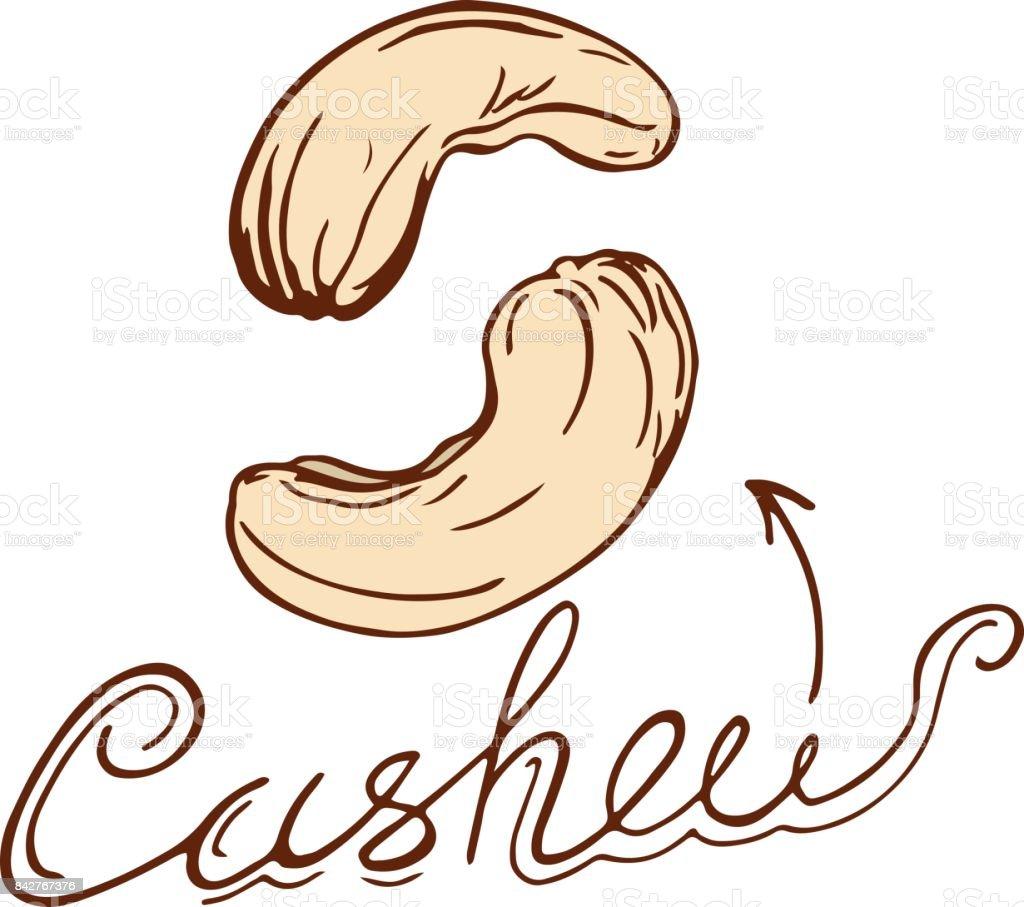 cashew vector art illustration