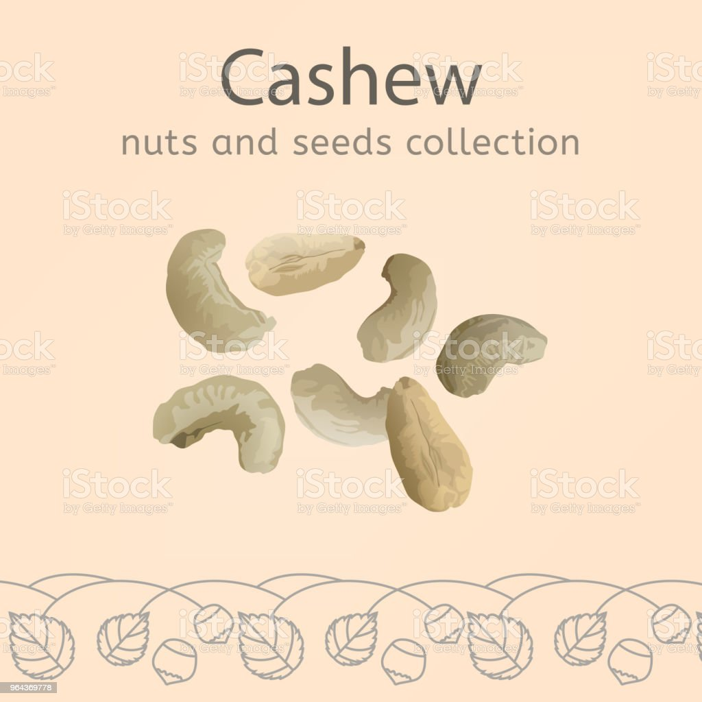 Cashew vector afbeelding - Royalty-free Achtergrond - Thema vectorkunst