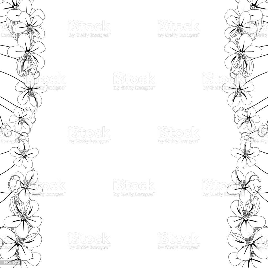 Cassia Fistula Golden Shower Flower Outline Border Stock Vector Art