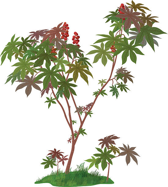 castor pflanzen und grünem gras - wunderbaum stock-grafiken, -clipart, -cartoons und -symbole