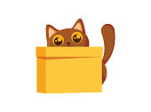 Cat and box. Learning preposition concept. Animal behind the box. Isolated vector educational illustration in cartoon style. Cute kitten sitting hiding behind the box. Domestic animal life.