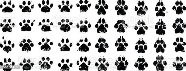 Cat and dog prints vector id683789142?b=1&k=6&m=683789142&s=612x612&h=takfhs5ehtjjlh3pyqaohrkj3e4br3nu93p f8whctq=