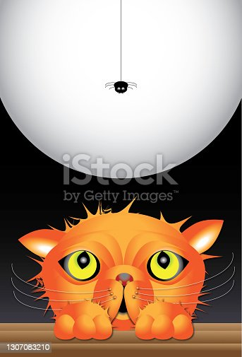 istock Cat and spider at Halloween 1307083210