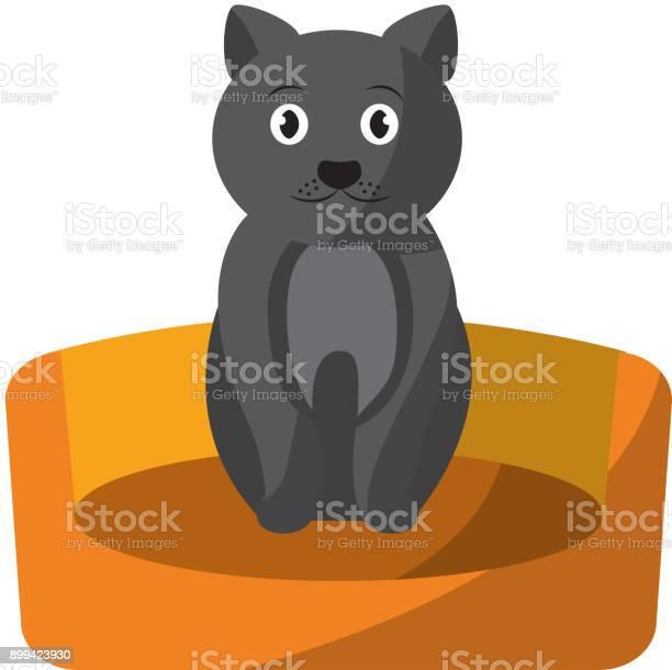 Cat animal pet in the bed vector id899423930?b=1&k=6&m=899423930&s=612x612&h=c4hnxay7qrueq0g37fy7ar cvu z7jfgrvimsuxowb4=
