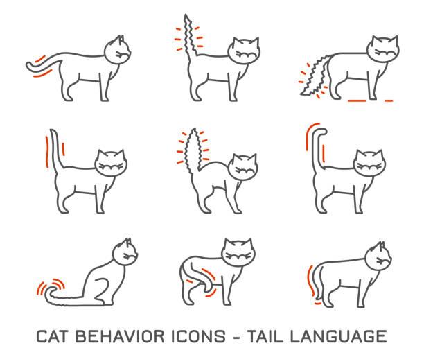 stockillustraties, clipart, cartoons en iconen met gedrag van de kat pictogrammen - miauwen