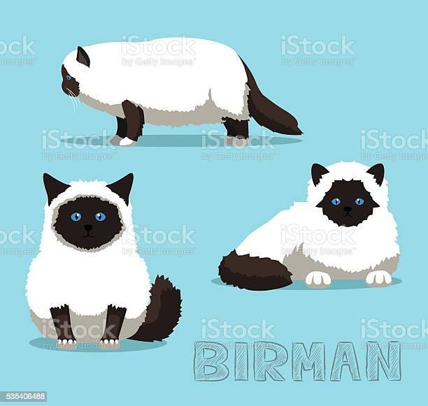 Cat birman cartoon vector illustration vector id535406488?b=1&k=6&m=535406488&s=612x612&h=edqerng0haldxkb6ivdfhfiayvx iqxd4k3q1ymqvzy=