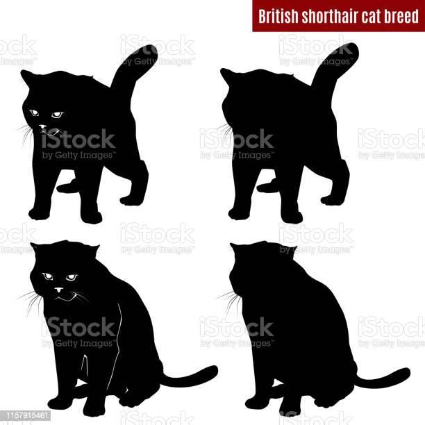 Cat black silhouettes on white background vector illustration vector id1157915461?b=1&k=6&m=1157915461&s=612x612&h=8k4kziw68pquxxefnrx1vtnnjn5aqgh u bczkr2mtu=