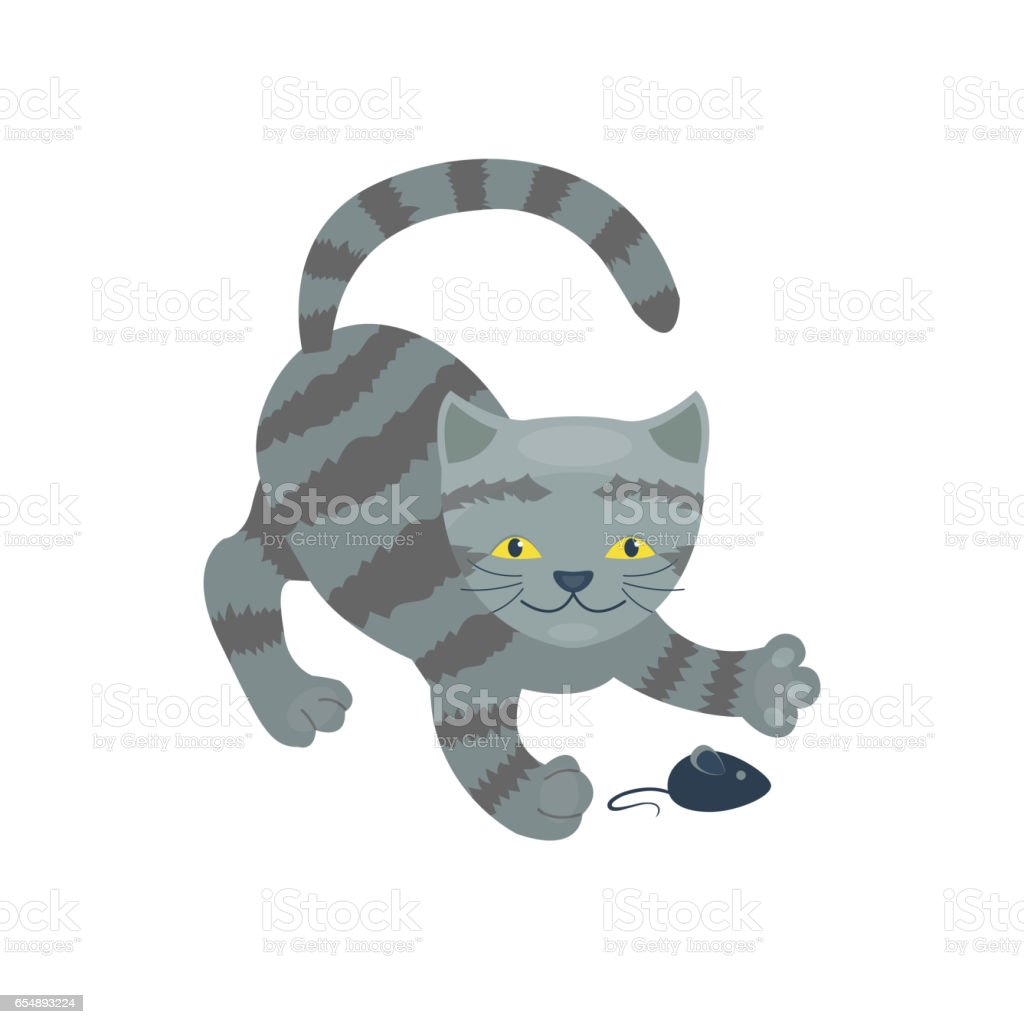Cat Breed Cute Kitten Gray Pet Portrait Fluffy Young Adorable
