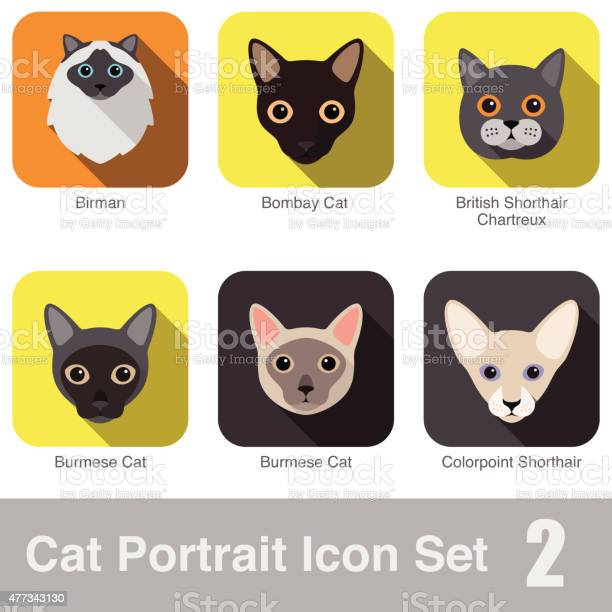 Cat breed face cartoon flat icon series vector id477343130?b=1&k=6&m=477343130&s=612x612&h=s3m9qruprtjl7 4dysrjhfya8onzi1itgs4jka1ohzq=