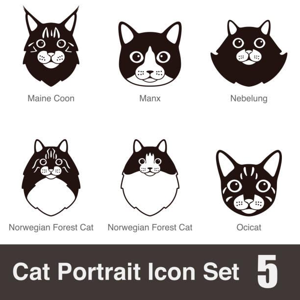 illustrazioni stock, clip art, cartoni animati e icone di tendenza di gatto di razza viso fumetto icona piatto serie - ocicat