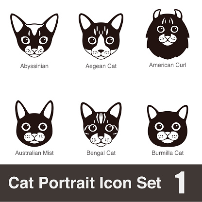 Cat breed face cartoon flat icon series, vector illustration