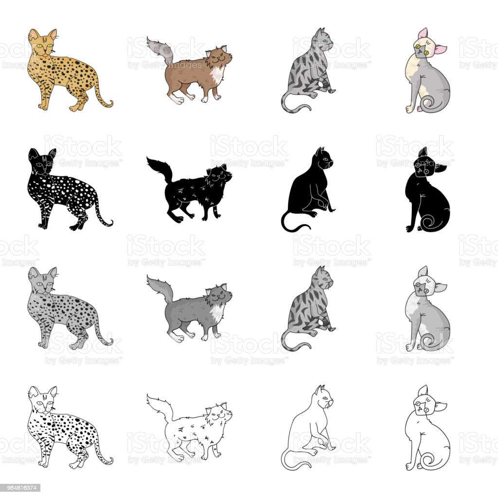 Cat breed Savannah, Norwegian Forest Cat, American Shorthair, Peterbald. Different breeds of cat set collection icons in cartoon black monochrome outline style vector symbol stock illustration web. royalty-free cat breed savannah norwegian forest cat american shorthair peterbald different breeds of cat set collection icons in cartoon black monochrome outline style vector symbol stock illustration web stock vector art & more images of animal