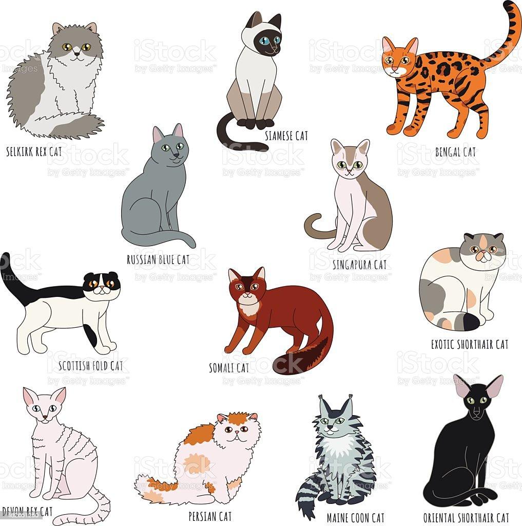Cat Breeds Cartoon Style Vector Set stock vector art