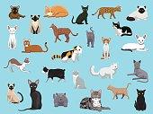 25 Cat Breeds Cartoon Vector Illustration