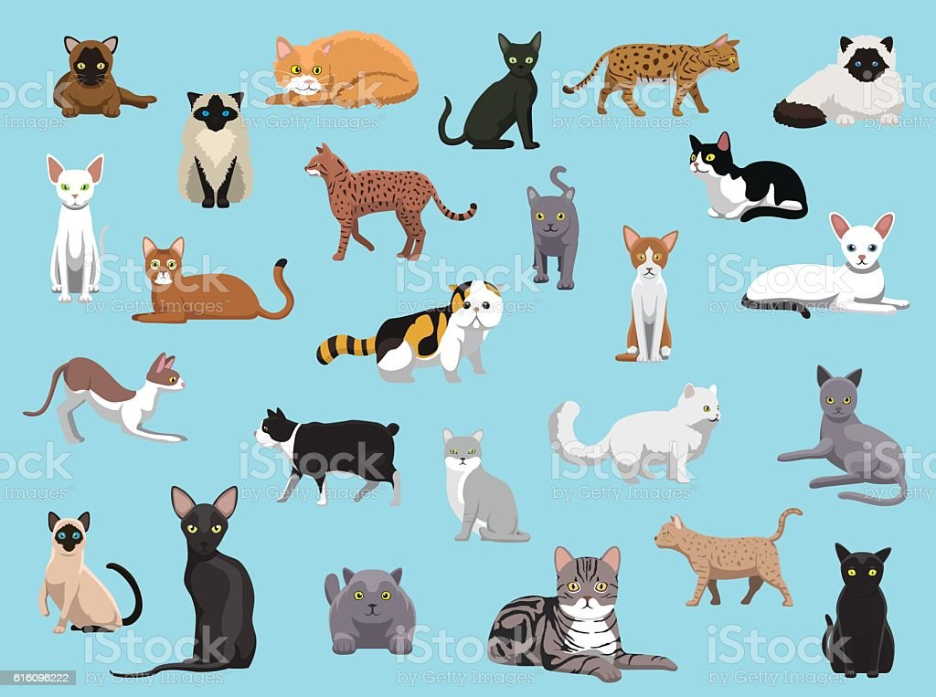 25 Cat Breeds Cartoon Vector Illustration – Vektorgrafik