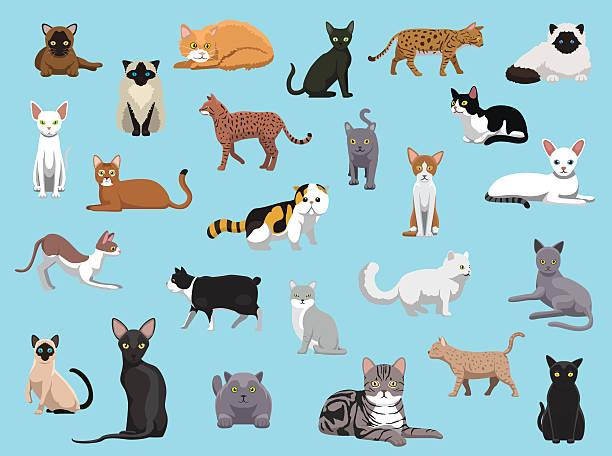 25 Cat Breeds Cartoon Vector Illustration vector art illustration