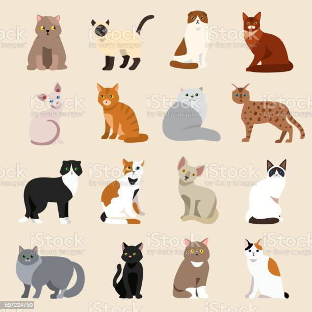 Cat breeds cute pet animal set vector id597224750?b=1&k=6&m=597224750&s=612x612&h=5wqkw31ektycc0871wmw d4e1su3z8qfm0ccddlvbw4=