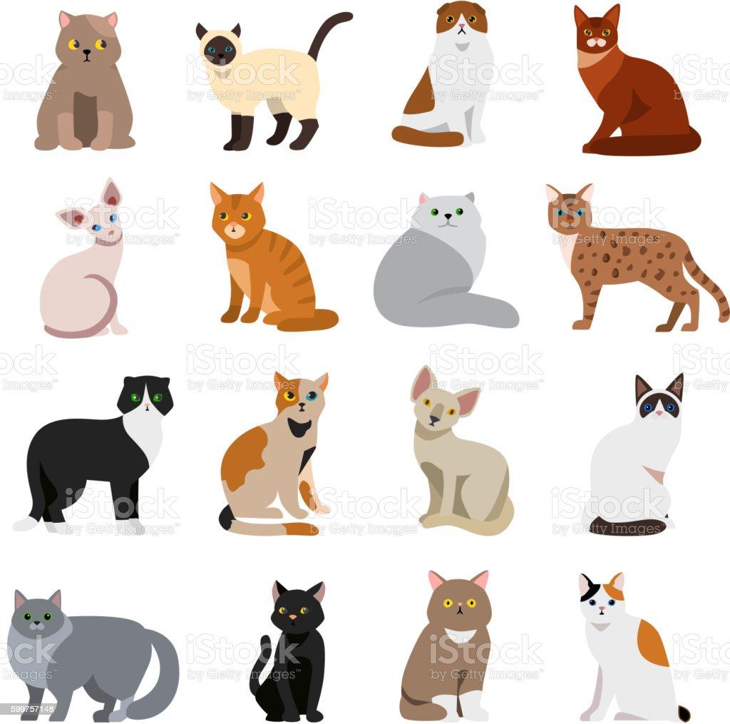 Scruffy Cat Breeds