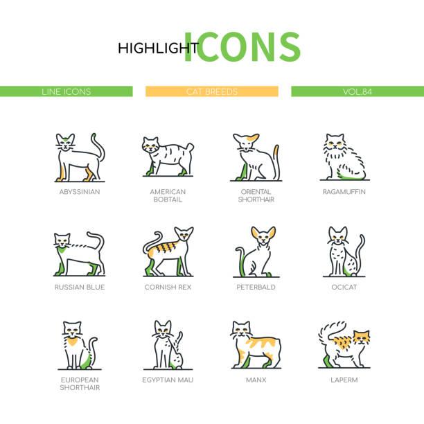 illustrazioni stock, clip art, cartoni animati e icone di tendenza di razze di gatti - moderno line design stile icone set - ocicat