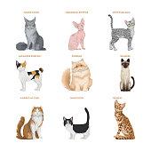 Cat breeds set on white background. Beautiful domestic animals.