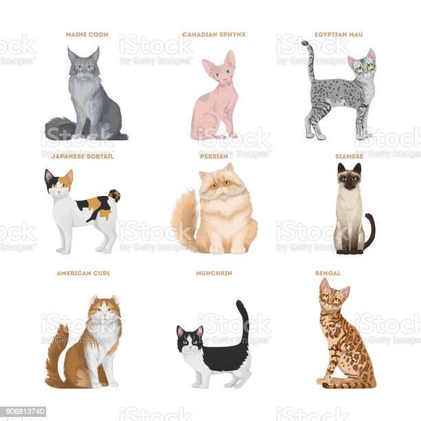 Cat breeds set on white background vector id906813740?b=1&k=6&m=906813740&s=612x612&h=yhm ixjvuew rhgzoas52z12nvetbaqbogfgtcudhiy=