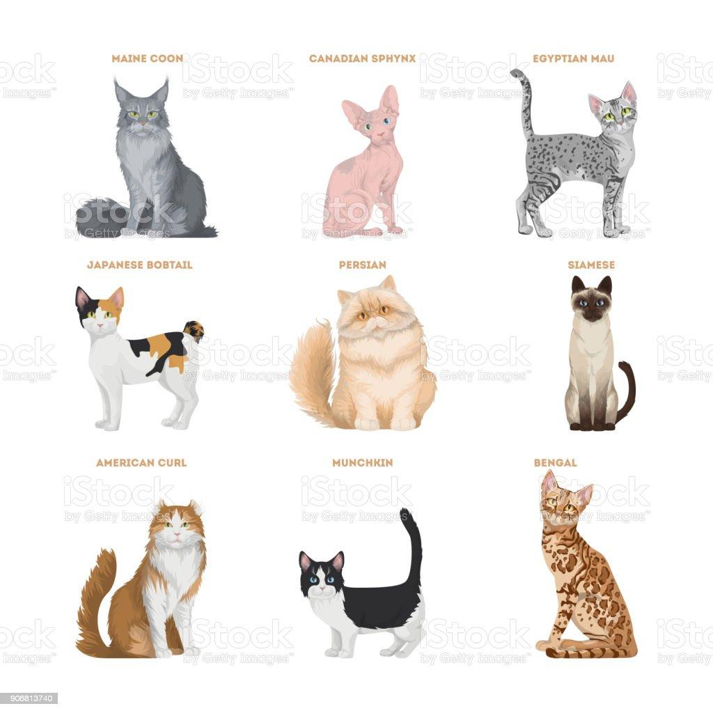 猫の品種は、白い背景に設定。 ベクターアートイラスト