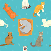 Cat breeds vector cute kitty pet cartoon cute sleep and play animal cattish character set catlike illustration seamless pattern background. Mammal human friend cat breed animals icons. Cat s paws