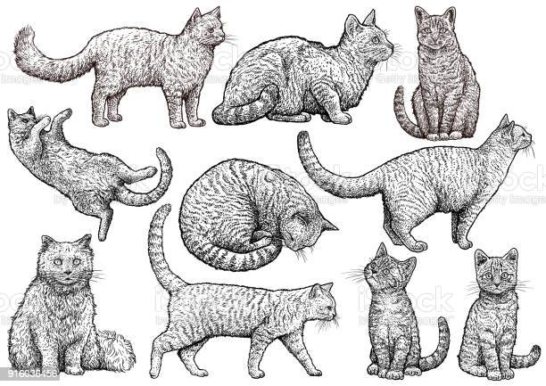 Cat collection illustration drawing engraving ink line art vector vector id916036456?b=1&k=6&m=916036456&s=612x612&h=18asi3yrpkc8qe4t3mfcs tma1nqby2yozoqs4djtqy=