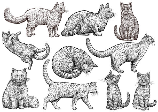 cat collection illustration, drawing, engraving, ink, line art, vector - cat stock illustrations, clip art, cartoons, & icons