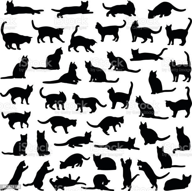 Cat collection vector silhouette vector id643578196?b=1&k=6&m=643578196&s=612x612&h=ijip 3zdtvrdywdwrhdh4lq5qyg0otfhzpjkyfuaszy=