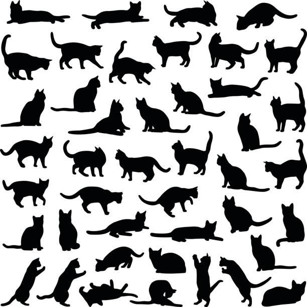 kolekcja cat - sylwetka wektorowa - neutralne tło stock illustrations