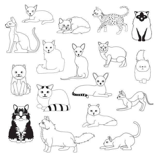 Best Egyptian Cat Illustrations, Royalty-Free Vector ...