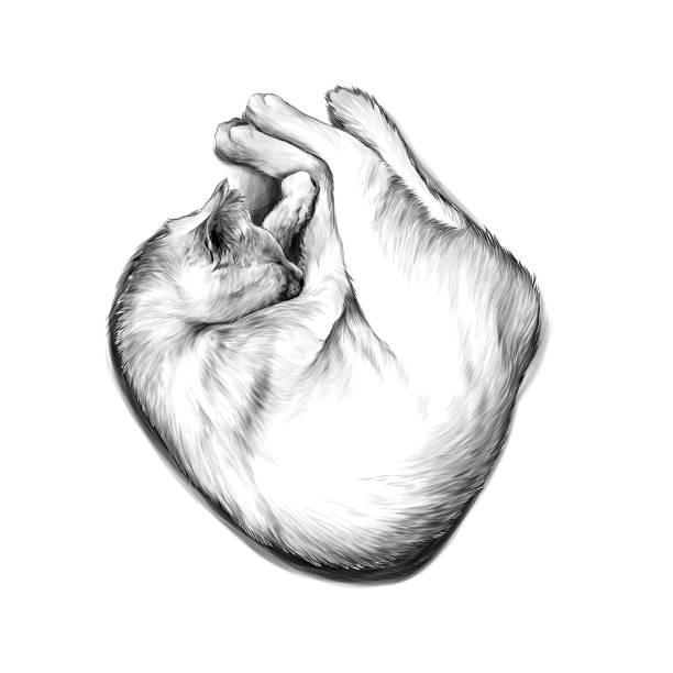 cat curled up in a ball and sleeping – artystyczna grafika wektorowa