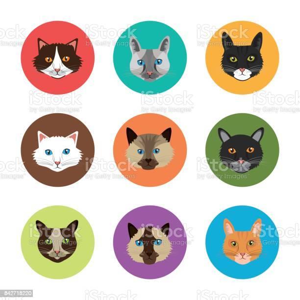 Cat design vector id842718220?b=1&k=6&m=842718220&s=612x612&h=dfaq7 jsap61jtbllvjfg1qzqrz3mux4nbx0mvb7m8a=