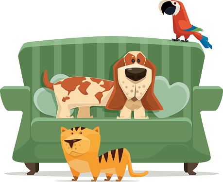 cat, dog and parrot